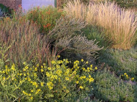 Appropriate grasses for the texas panhandle high plains gardening ornamental grasses are an important component of our landscape whether planted in mass forming waves or drifts sprinkled among herbaceous beds and workwithnaturefo
