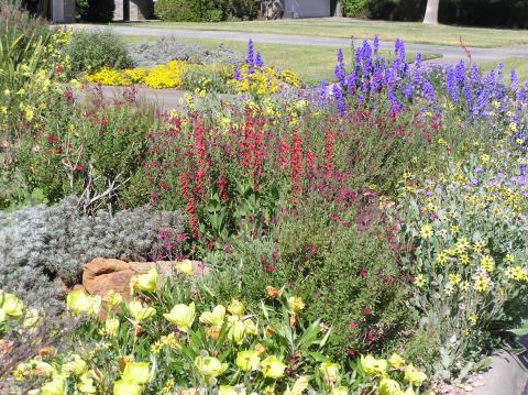 Growing the Southwest Garden: Regional Ornamental Gardening (Regional Ornamental Gardening Series) b