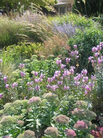 Plant list for the texas panhandle flowers high plains gardening send me your suggestions and growing conditions for plants you feel should be added to this list i know there are yet many mightylinksfo