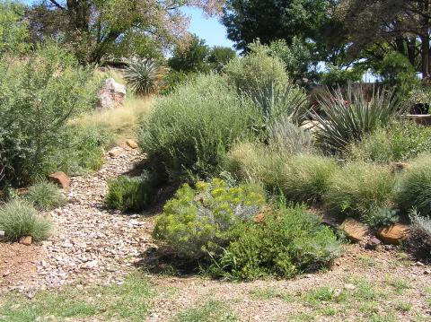 Local Native Shrubs Grasses And Cacti High Plains Gardening