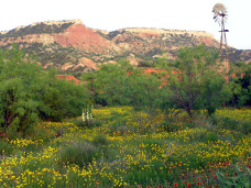 wildflowers at PDC.JPG